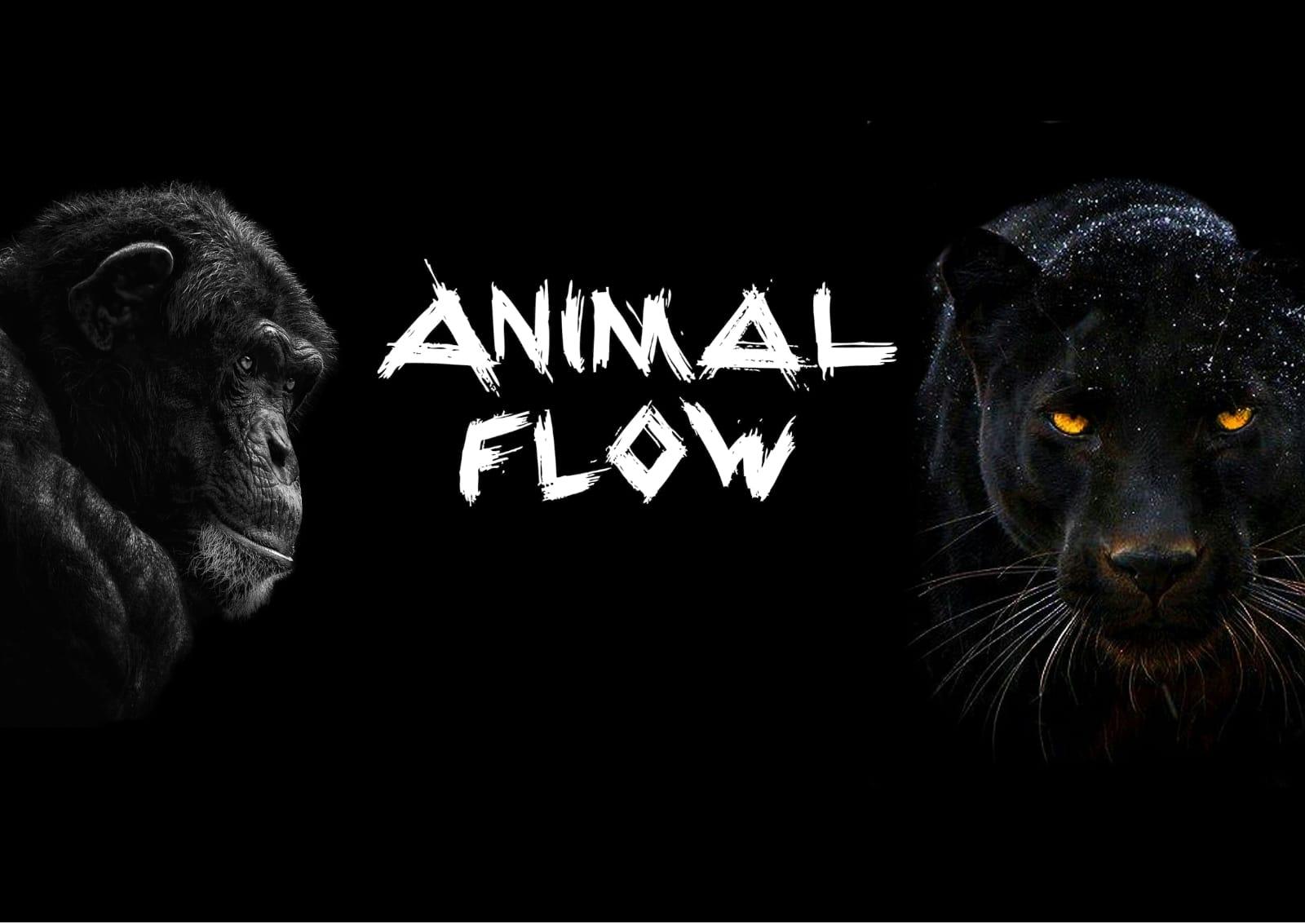 animal flow ejercicios